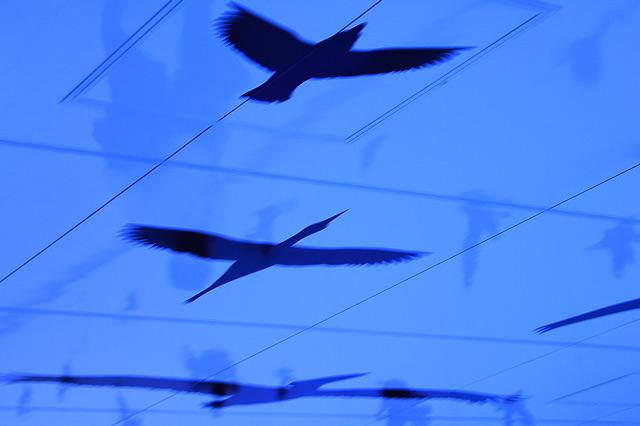 空を飛ぶ鳥のアート