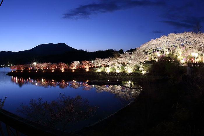 恵那峡さざなみ公園のライトップされた桜