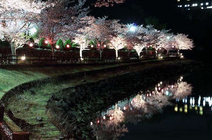 恵那峡の桜のライトアップ