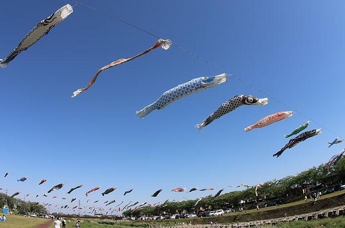 相川水辺公園の鯉のぼり