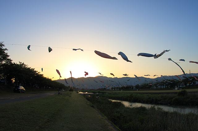夕日と鯉のぼり