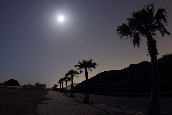 月と椰子の並木