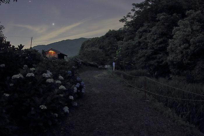 八島川沿いの紫陽花とホタル