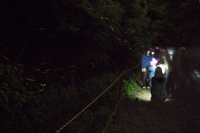 ゲンジボタルを観賞する人とホタルの軌跡