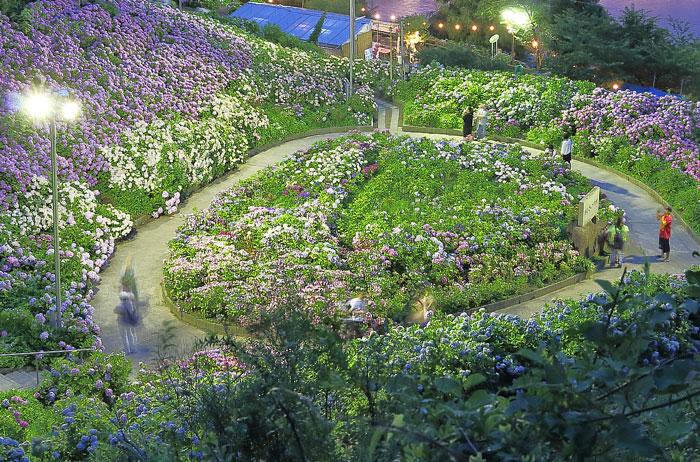 ライトアップされた紫陽花ガーデン