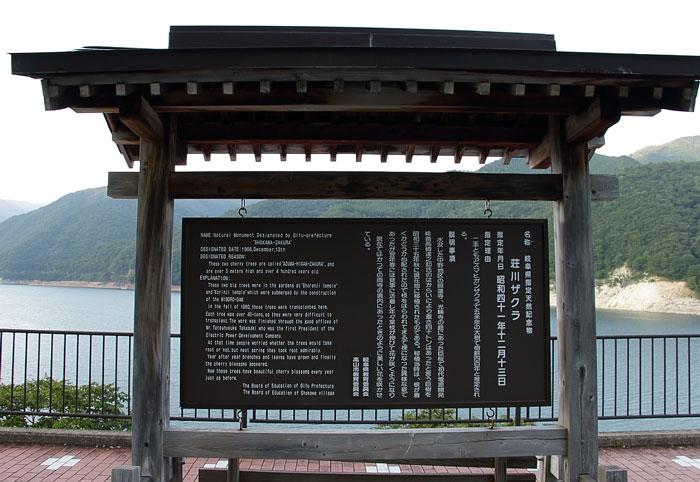 荘川桜の案内看板