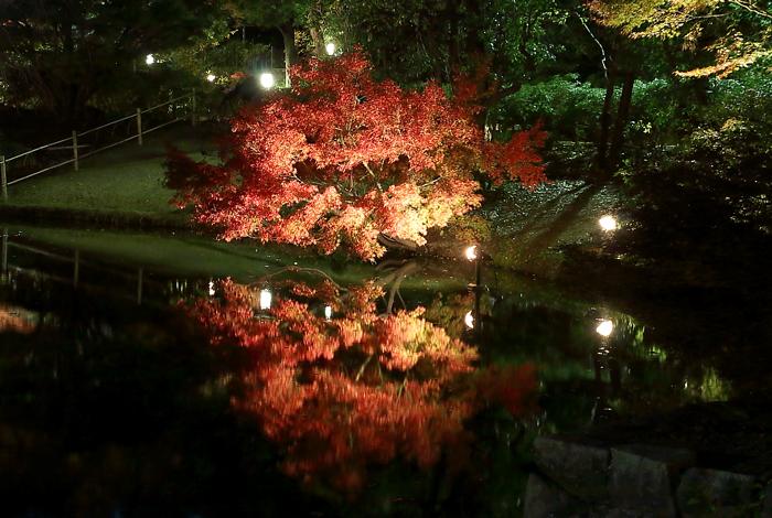 上の池に映るライトアップ紅葉