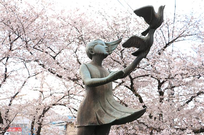 鳩を飛ばす少女の銅像と桜