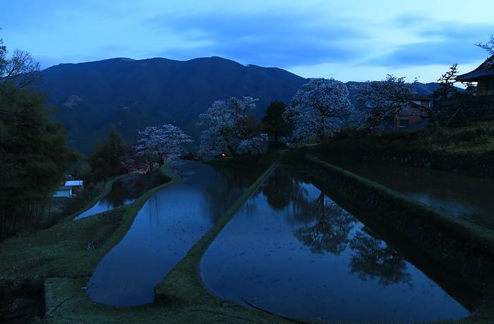 日没直後の三多気の棚田と桜