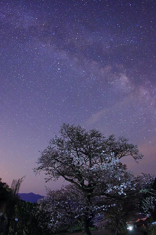 桜と天の川