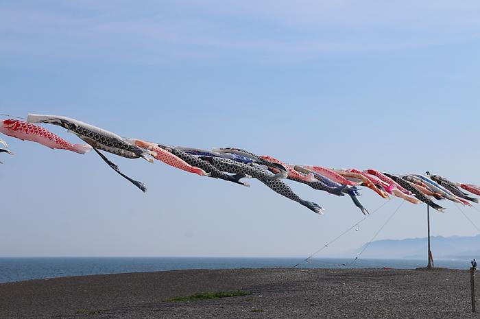 熊野市・七里御浜海岸の鯉のぼり