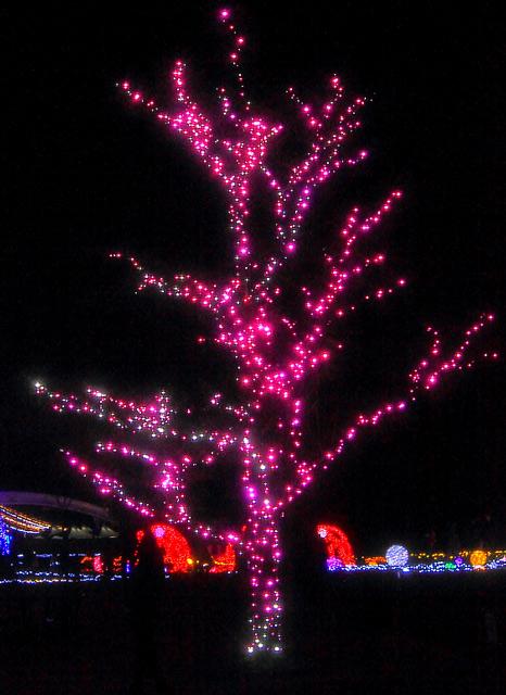 ピンク色に光るツリー