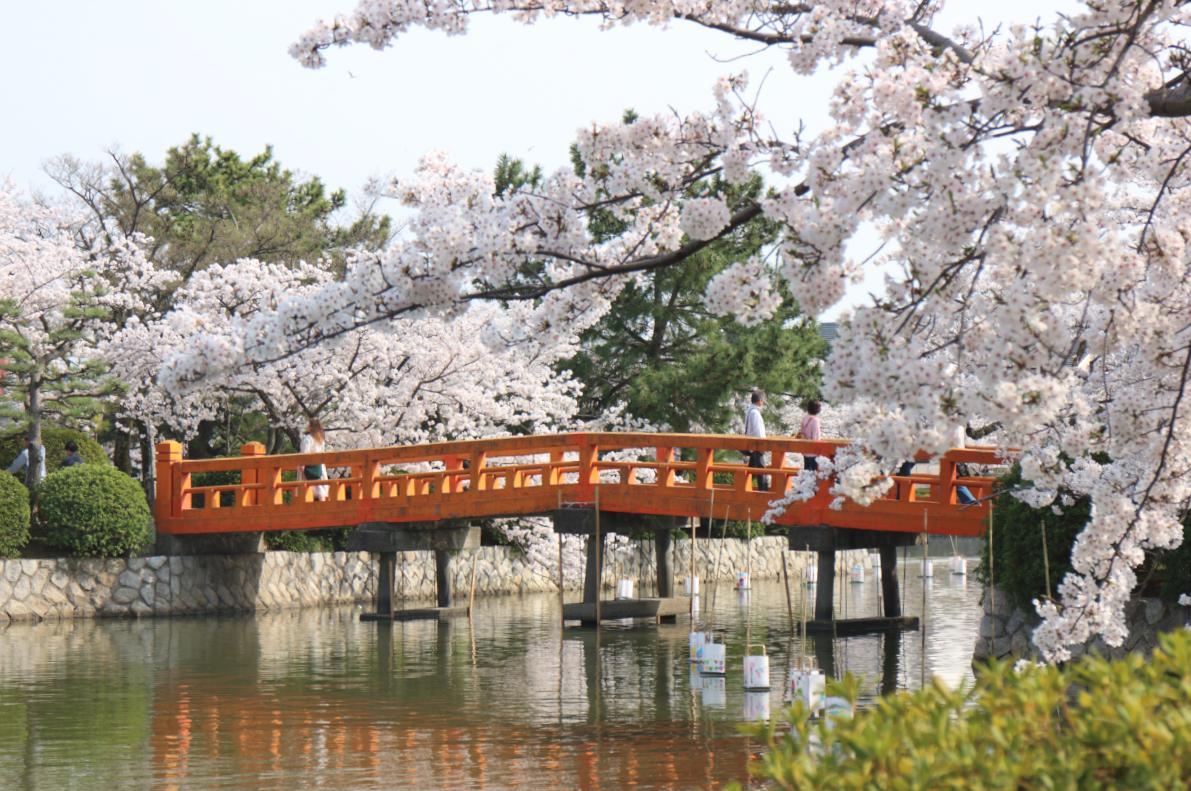 九華公園の桜と橋