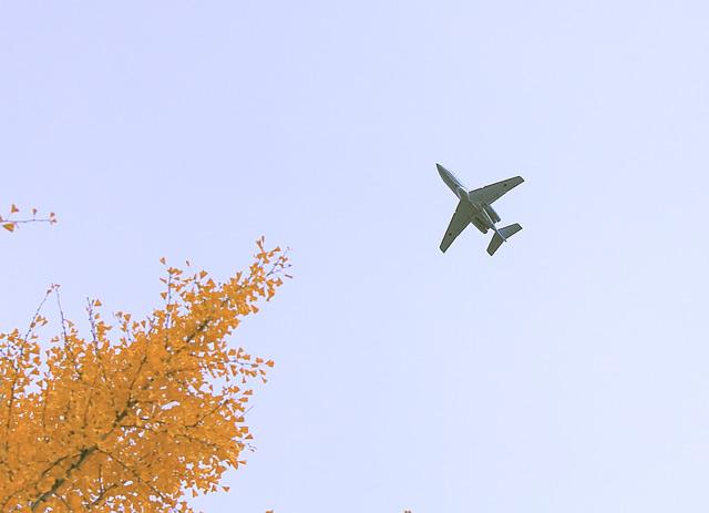 航空祭の展示飛行とイチョウの木