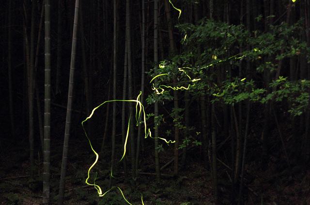 森林を飛び交う光跡