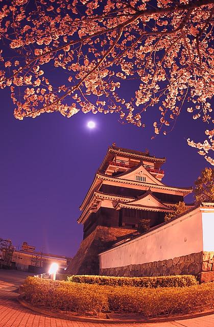 ライトアップされた桜と清州城と満月