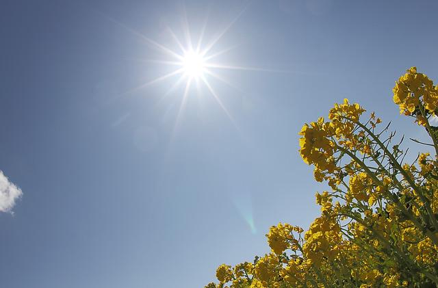 太陽とナノハナ
