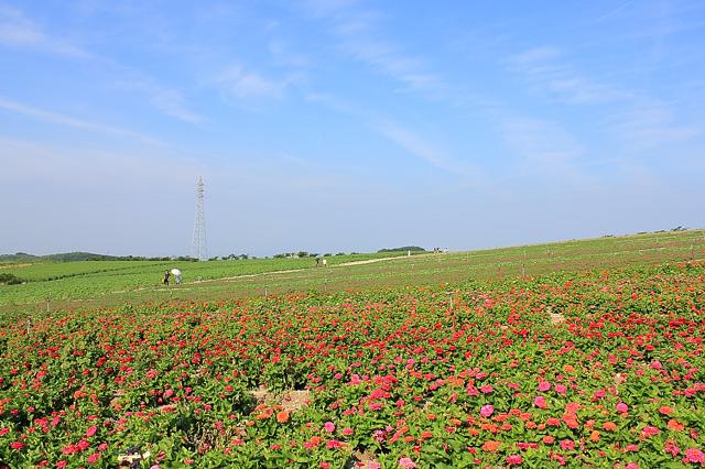 観光農園花広場の開けた景観