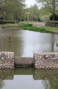 公園内の池