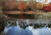 池に映し出された紅葉と青空