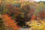 色とりどりの紅葉の木々