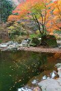 川面に映る7種類の紅葉と七色岩