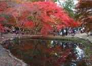 澄んだ池に写りこむ公園の紅葉