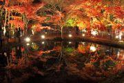 美しい逆さ紅葉のライトアップ