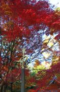愛の錫杖と紅葉