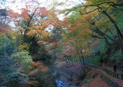 万代橋からの紅葉の眺め