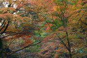 色鮮やかな紅葉の屋根