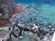 餌に群がるペンギン