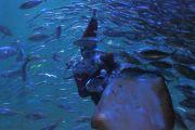 サンタクロースによる魚の餌付けガイド