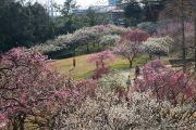 高台から見た梅林公園