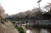 瑞穂橋周辺の山崎川河川敷