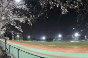 瑞穂陸上競技場と夜桜