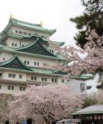 名古屋城(東側)と桜