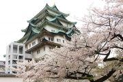 名古屋城(北側)と桜