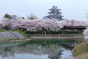 墨俣一夜上と桜と川