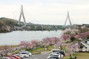 水源緑地公園の桜と伊勢湾岸自動車道