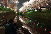 五条川とライトアップされた桜