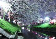 夜桜と露店の明かり