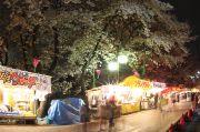 夜の露店と桜