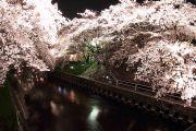 五条川と桜・夜間ライトアップ