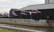 ミツカン工場と鯉のぼり