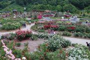 世界の薔薇園