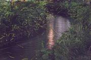 へいけ橋から見たホタル(午後8時30分)