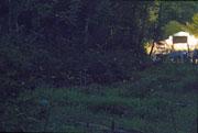 蛍を観賞する人とゲンジボタルの光跡