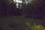 鑑賞者用バリアフリーデッキから見たホタルの光跡