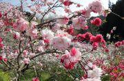 赤とピンク色の花